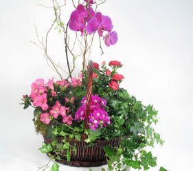 dallas sympathy florist plants