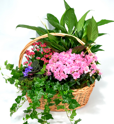 Large Garden Basket from Dallas Sympathy Florist in Dallas, TX