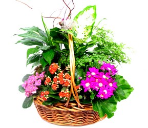 Summer Garden Plant Basket  from Dallas Sympathy Florist in Dallas, TX