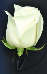 Rose Boutonniere from Dallas Sympathy Florist in Dallas, TX