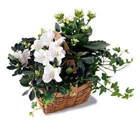 White Assortment Basket from Dallas Sympathy Florist in Dallas, TX